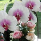 orchid and roses