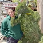 topiary bear pruning tips