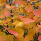 deciduous foliage